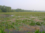6-83 Spring Valley Wildlife Area - A Feature of Ohio's Wetlands